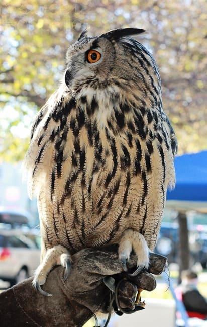 salt lake city farmers market owl
