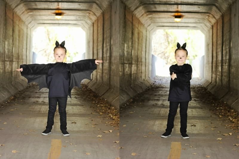 Bat collage